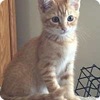 Adopt A Pet :: Jimmy - Kelso/Longview, WA