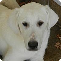 Adopt A Pet :: KYLIE - Granite Bay, CA