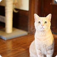 Adopt A Pet :: Donaldson - THORNHILL, ON