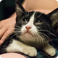 Adopt A Pet :: Tobi $10 TO ADOPT! - San Jose, CA