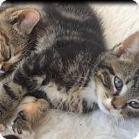 Adopt A Pet :: Yuki - Brooklyn, NY