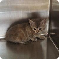 "Adopt A Pet :: Miss Thang ""$25 Fee in Dec"" - Ottawa, KS"