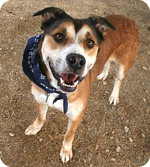 Shepherd (Unknown Type) Mix Dog for adoption in Pilot Point, Texas - Buck