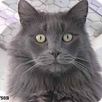 Adopt A Pet :: Grayson - Fullerton, CA