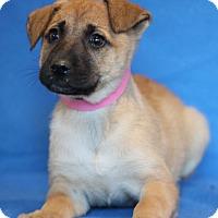 Adopt A Pet :: Arkansas - Waldorf, MD