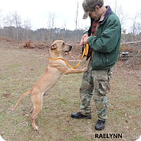 Adopt A Pet :: Raelynn - Washington, GA