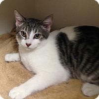 Adopt A Pet :: Storm Trooper - Putnam Hall, FL