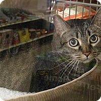 Adopt A Pet :: TINK - Diamond Bar, CA
