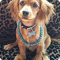 Adopt A Pet :: Matilda - Sugarland, TX