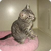Adopt A Pet :: ALVIN - 2014 - Hamilton, NJ
