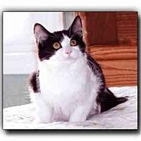 Adopt A Pet :: Larry - Howell, MI