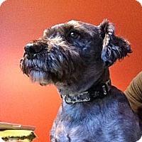 Adopt A Pet :: Peanut - Rigaud, QC