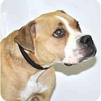 Adopt A Pet :: Olivia - Port Washington, NY
