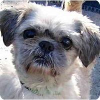 Adopt A Pet :: Oscar-NY - Mays Landing, NJ