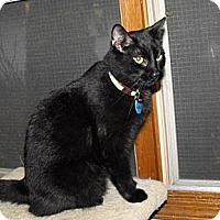 Adopt A Pet :: Snickers - Grand Rapids, MI