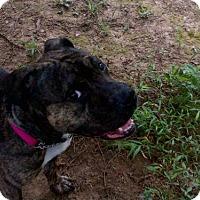 Adopt A Pet :: Mimi - Kimberton, PA