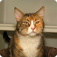 Adopt A Pet :: Apple - Milford, MA