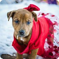 Adopt A Pet :: Guinness - Salt Lake City, UT