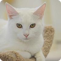 Adopt A Pet :: Oro - San Leon, TX