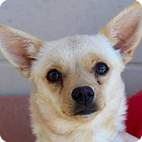 Adopt A Pet :: FAWN - Red Bluff, CA