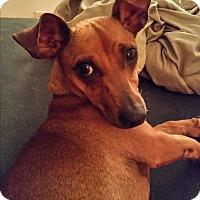Adopt A Pet :: Harper - Pinellas Park, FL