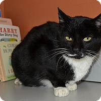 Adopt A Pet :: Babs - Michigan City, IN