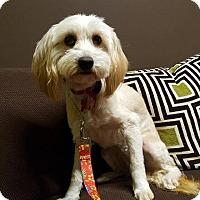 Adopt A Pet :: Farrah - Van Nuys, CA