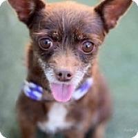 Adopt A Pet :: Heidi-Carmen - Mesa, AZ