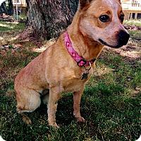 Adopt A Pet :: Georgia - Grand Rapids, MI