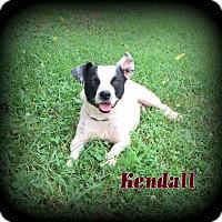 Adopt A Pet :: Kendall - Denver, NC