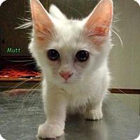 Adopt A Pet :: Mutt - Oskaloosa, IA