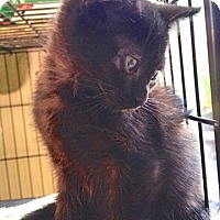 Adopt A Pet :: Cozy - Sparta, NJ