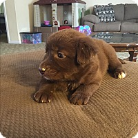 Adopt A Pet :: Mocha - Hazard, KY