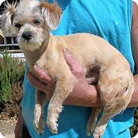 Adopt A Pet :: MURPHY - Corona, CA