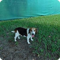 Adopt A Pet :: Buster - Lake Panasoffkee, FL