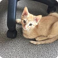 Adopt A Pet :: Dude - Marietta, GA