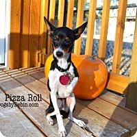 Adopt A Pet :: Pizza Roll - Kansas City, MO