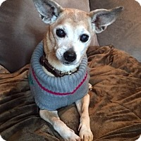 Adopt A Pet :: Miya - Clayton, CA