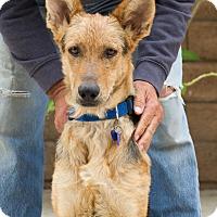 Adopt A Pet :: Hermes von Herten - Thousand Oaks, CA