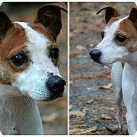 Adopt A Pet :: Coco - Forked River, NJ