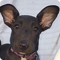Adopt A Pet :: Carson - Memphis, TN