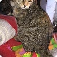 Adopt A Pet :: Adele - Sedalia, MO