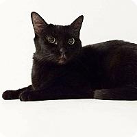 Adopt A Pet :: Squirt - Elyria, OH
