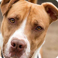 Adopt A Pet :: Spartacus - Lexington, TN