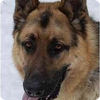 Adopt A Pet :: Prince - Rigaud, QC