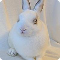 Adopt A Pet :: Sleepyhead - Los Angeles, CA