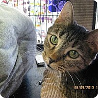Adopt A Pet :: Shelton - West Dundee, IL