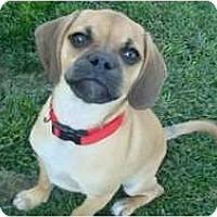 Adopt A Pet :: Macy - Poway, CA