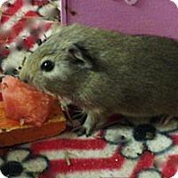 Adopt A Pet :: Patsy - Fullerton, CA