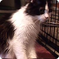Adopt A Pet :: Gabrila - Acme, PA